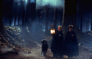 Draco & Harry FF