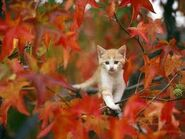 Kitten in tree