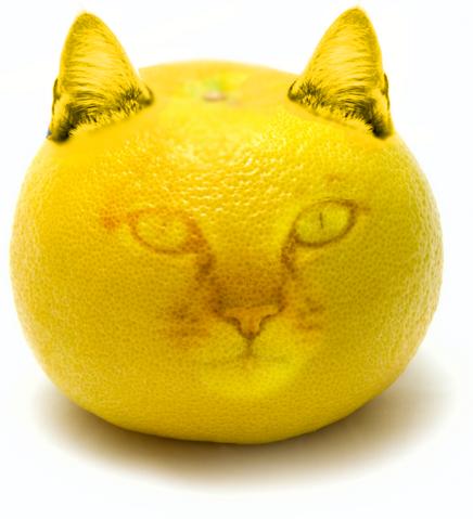 File:Catgrapefruit.png