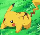 Pikachu Hollinger