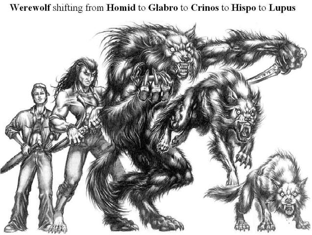 File:Werewolf5forms.jpg