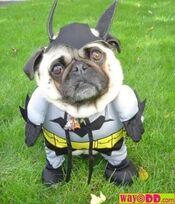 Bateman dog