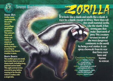 Zorilla front