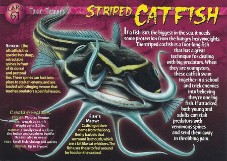 Striped Catfish front