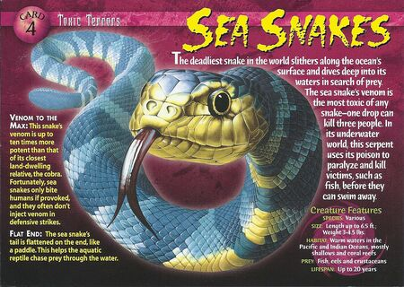 Sea Snake front