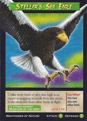 Stellar's sea eagle 2