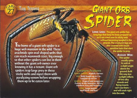 Giant Orb Spider front