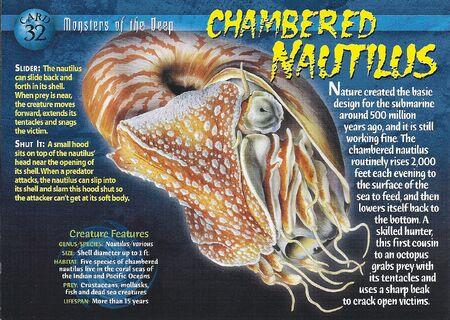 Chambered Nautilus front