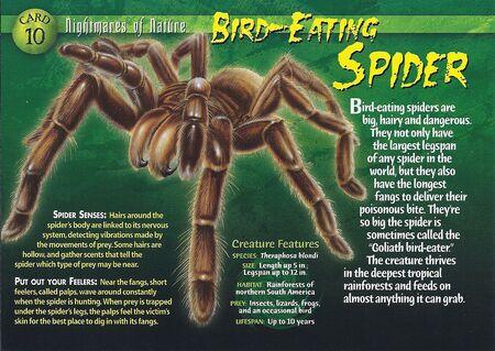 Bird-Eating Spider front