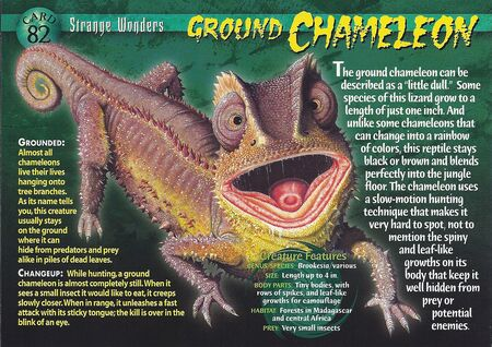 Ground Chameleon front