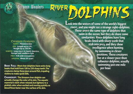 River Dolphin front