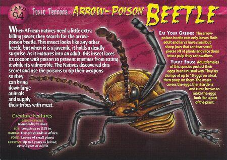Arrow-Poison Beetle front