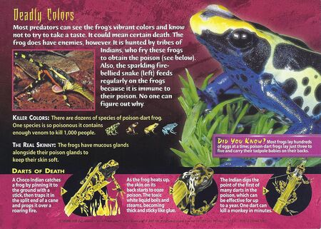 Poison-Dart Frogs back