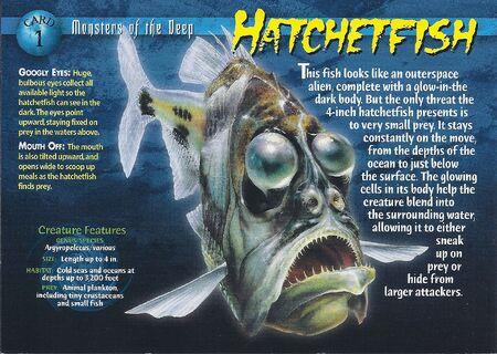 Hatchetfish front