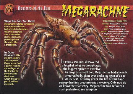 Megarachne front
