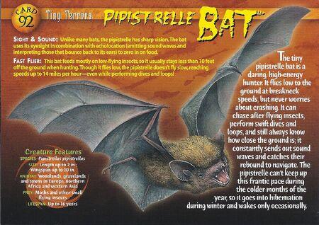 Pipistrelle Bat front