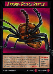 Arrow-Poison Beetle