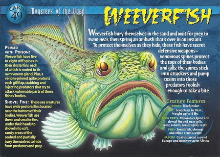 Weeverfish front