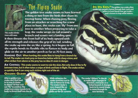 Golden Tree Snake back