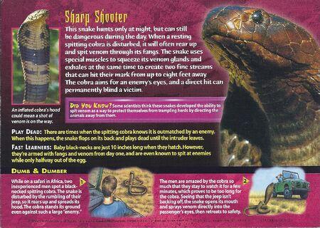 Black-Necked Spitting Cobra back