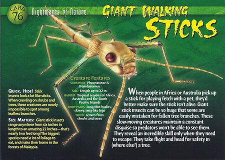 Giant Walking Stick front
