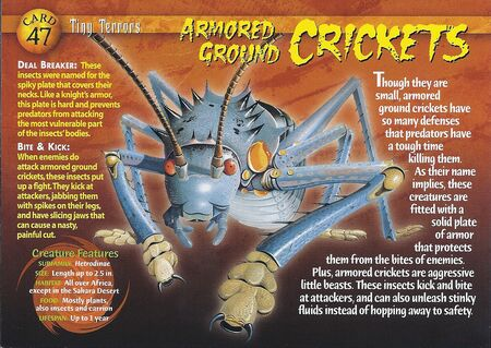 Armored Ground Cricket front