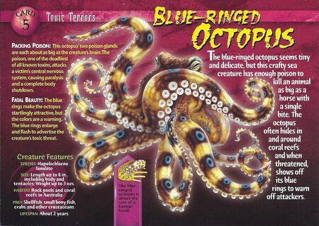 Blue-Ringed Octopus front