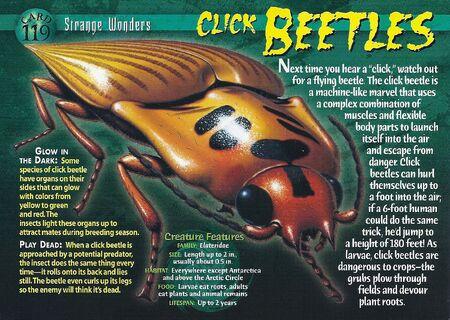 Click Beetles front