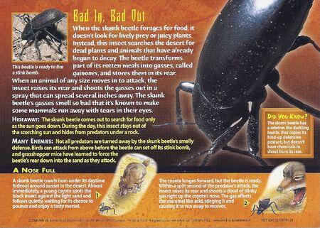 Skunk Beetle back