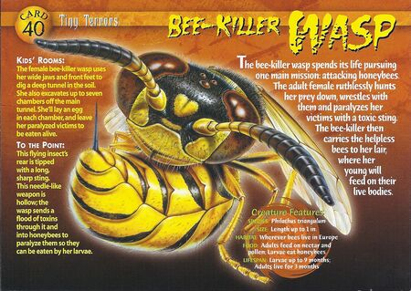 Bee-Killer Wasp front