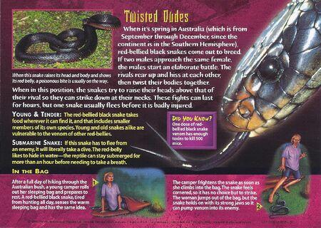 Red-Bellied Black Snake back