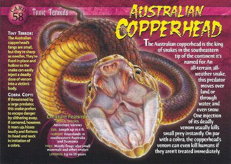 Australian Copperhead front