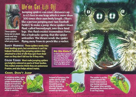 Jumping Spiders back