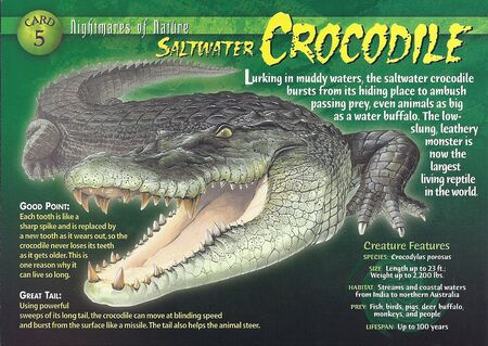 Saltwater Crocodile front