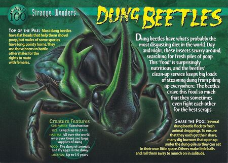 Dung Beetles front