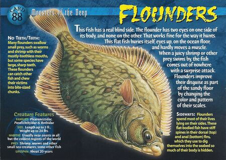 Flounders front