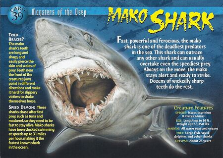 Mako Shark front
