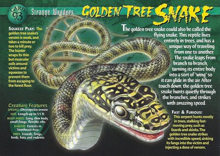 Golden Tree Snake front