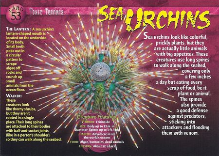 Sea Urchins front