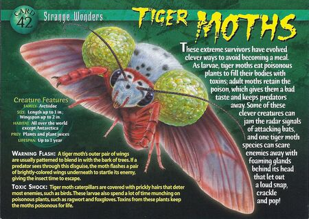 Tiger Moths front