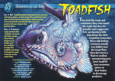 Toadfish front