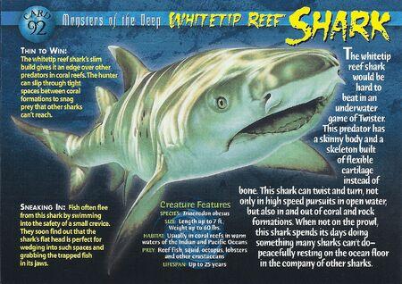 Whitetip Reef Shark front