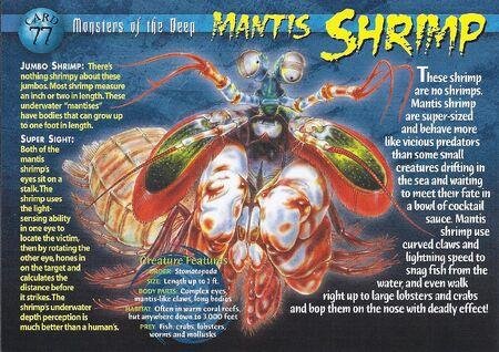 Mantis Shrimp front