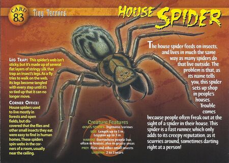 House Spider front