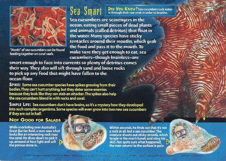 Sea Cucumbers back