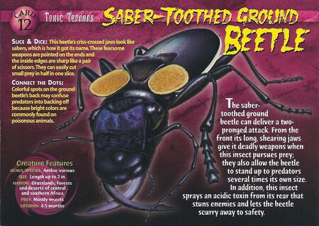 Saber-Toothed Ground Beetle front