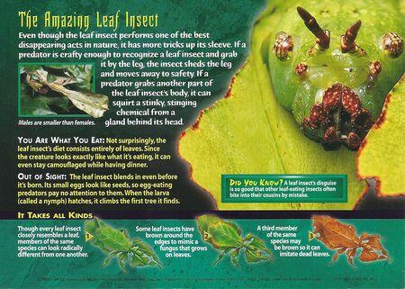 Leaf Insects back