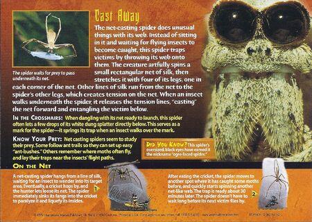 Net-Casting Spider back