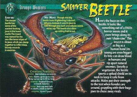 Sawyer Beetle front