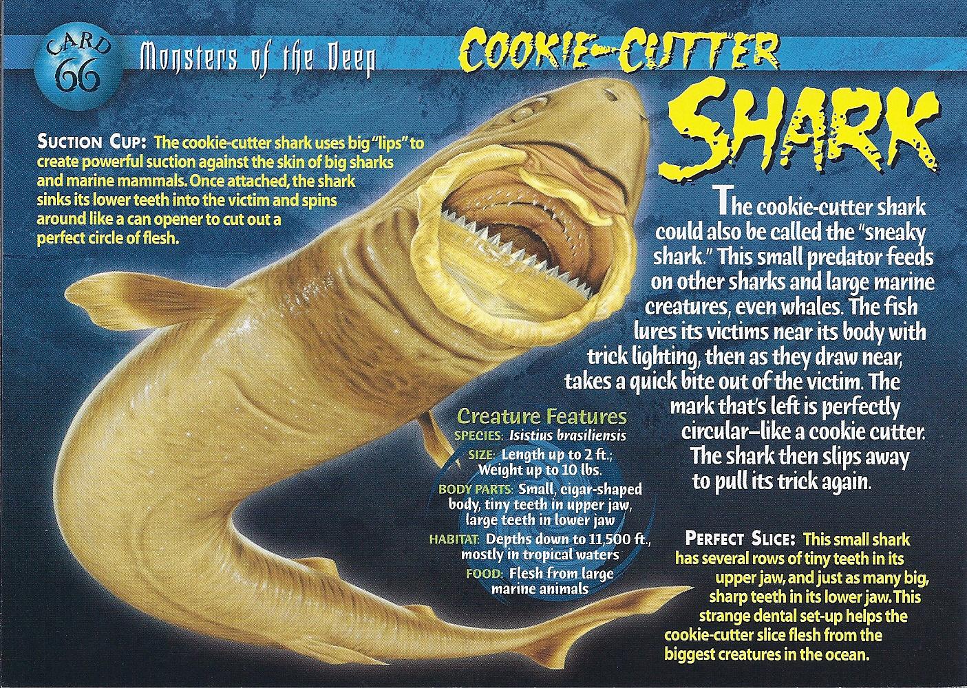 giant moray eel bite